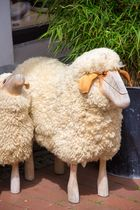 Schafe in der Fussgängerzone