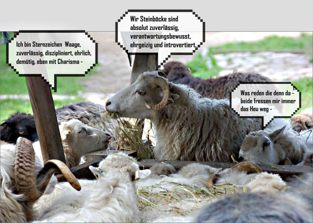 Schafe unter sich