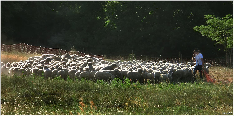 Schafe zählen...