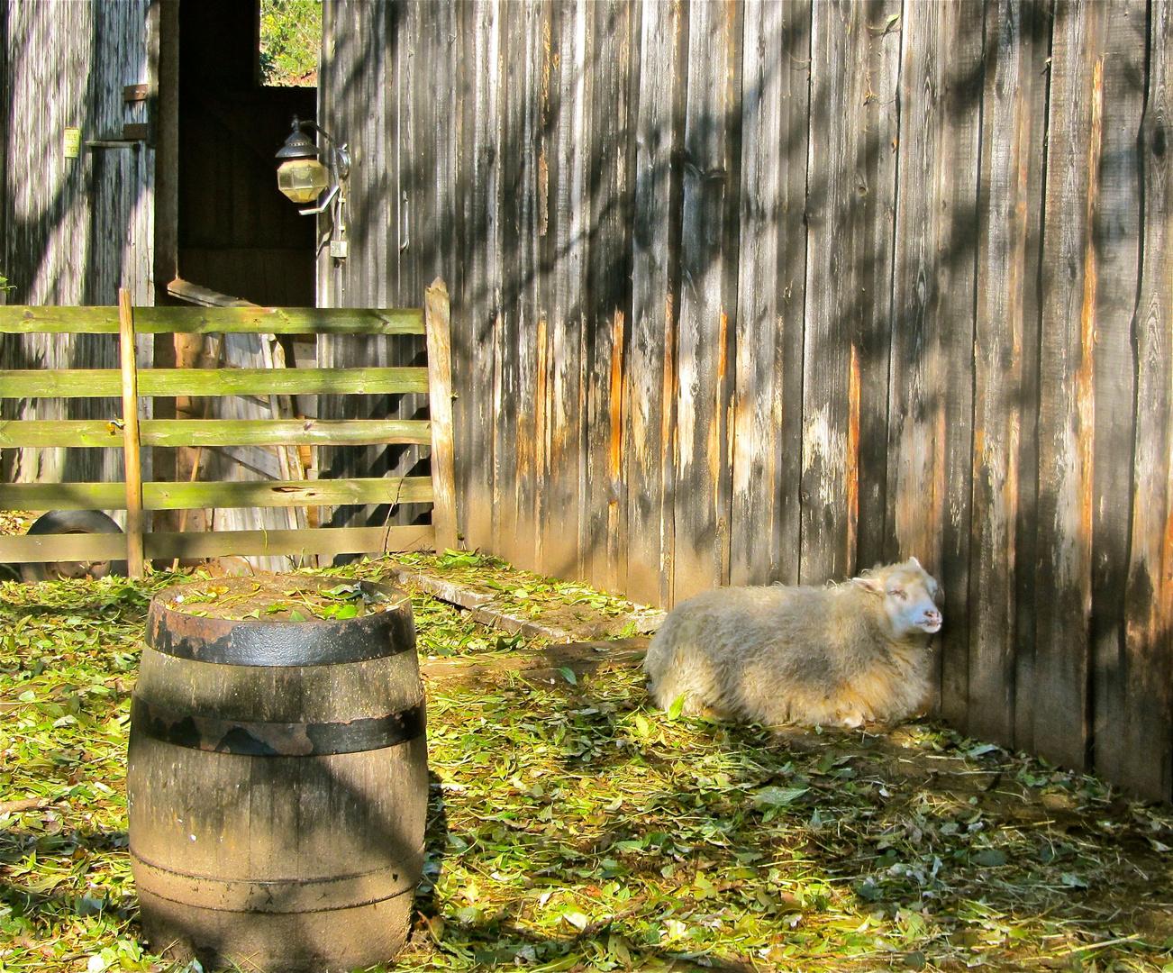 Schafes Heim, Glück allein..