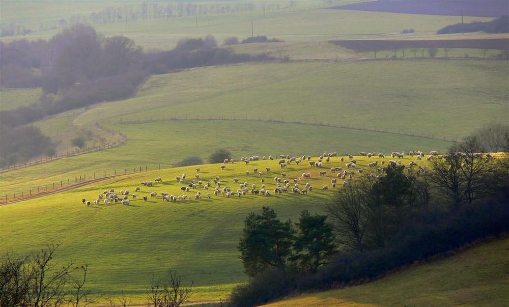 Schafherde auf einem sonnigen Hügel