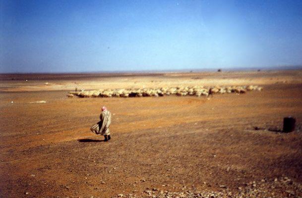 Schafhirte in der Wüste