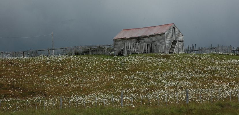 Schafhütte auf Feuerland/Argentinien