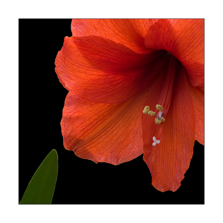 Scharfe Blume