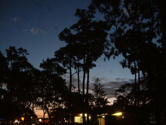 """scharfe"" Fledermaeuse im Sonnenuntergang"