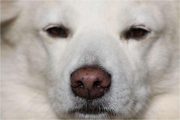 Scharfe Nase