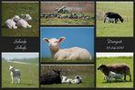 Scharfe Schafe - Dangast