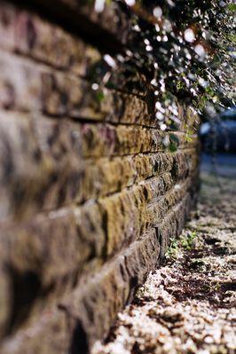 scharfe Unschärfe (Garten Mauer)