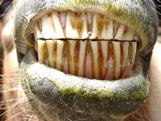 Scharfe Zähne