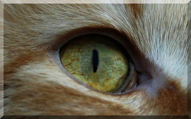 Scharfes Auge