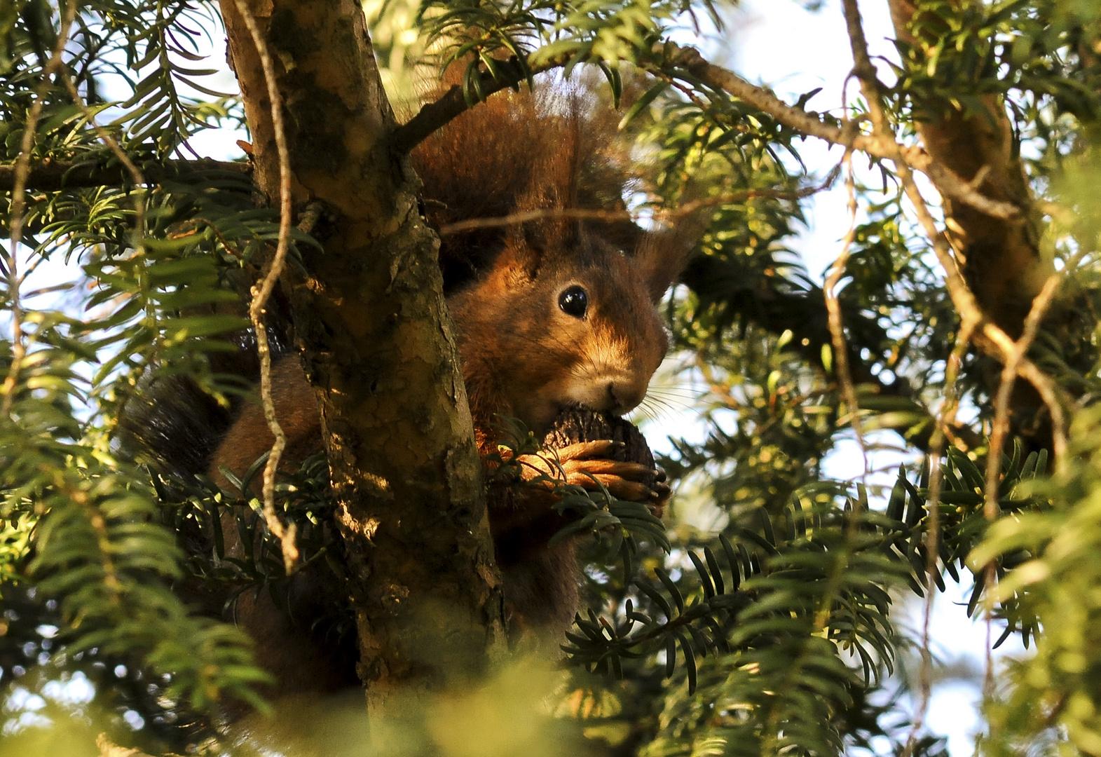Scharfes Hörnchen...