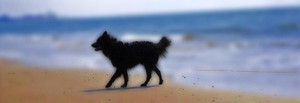 Schatten am Strand