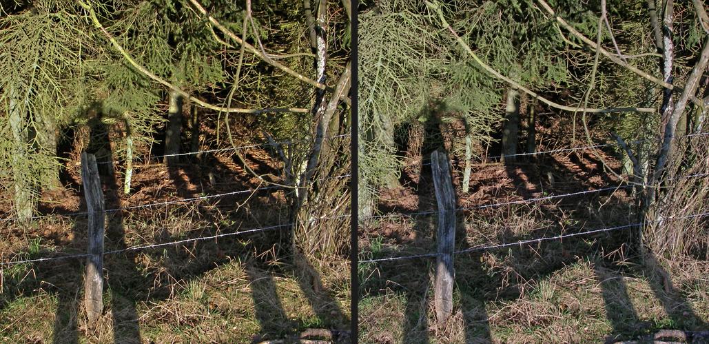 Schatten am Waldrand