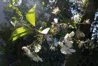 Schatten-Blüten