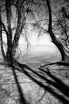 Schatten der Bäume
