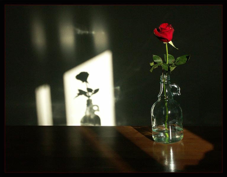 Schatten der Liebe