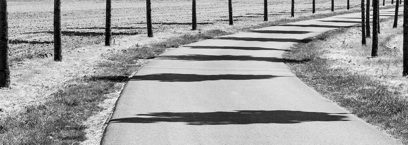 Schatten im Blick II