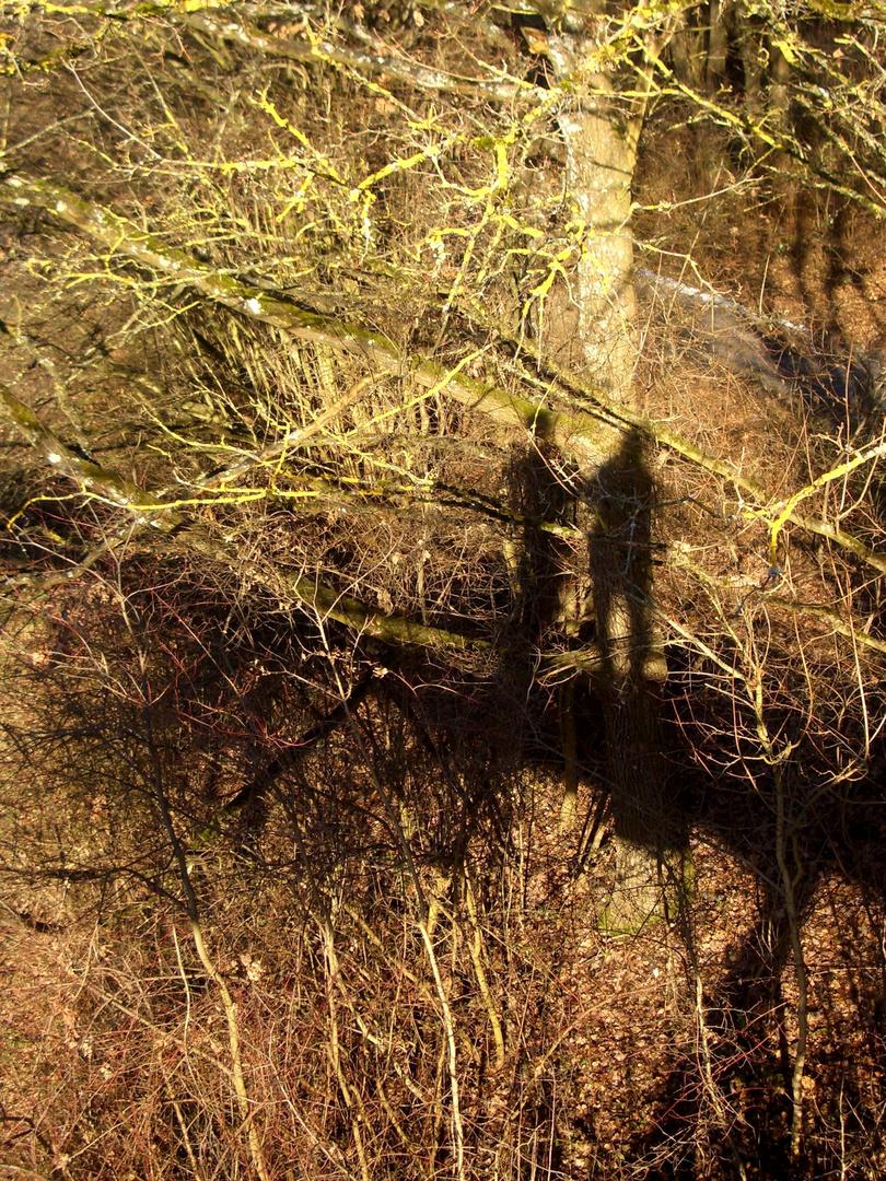 Schatten im Wald