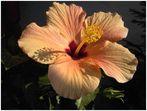 Schatten in der Blüte