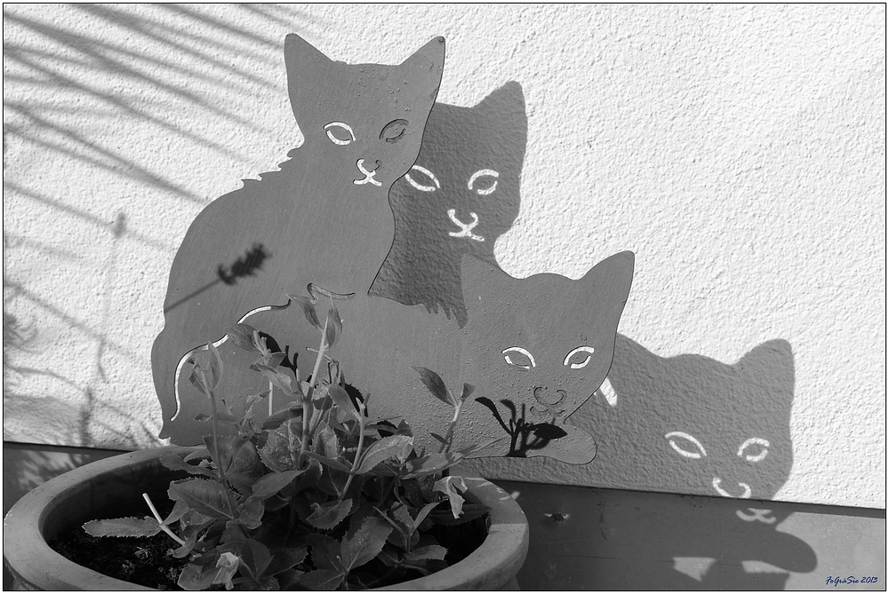 * Schatten-Katzen *