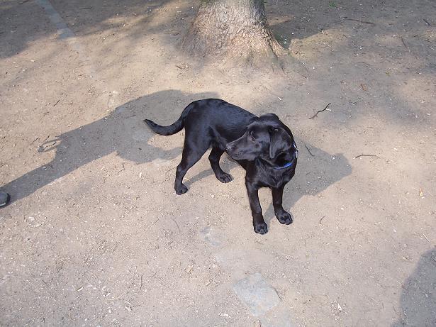 Schatten piekt Hund