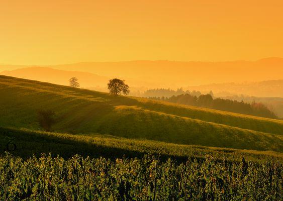 Schatten über den Feldern