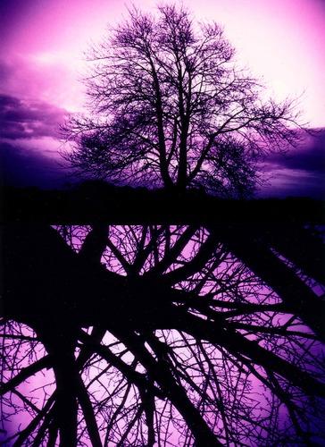 Schattenbäume