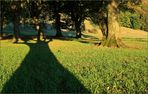 Schatten*Baum