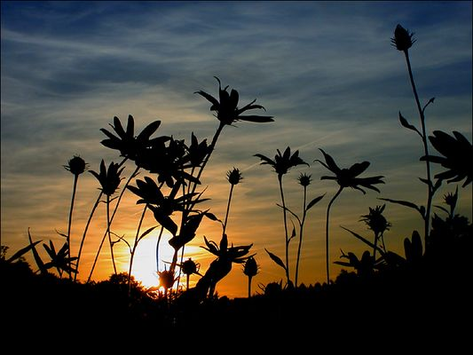 Schattenblumen