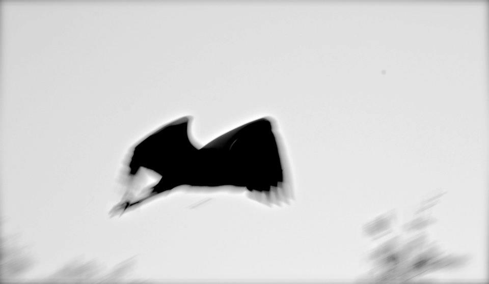 Schattenflieger