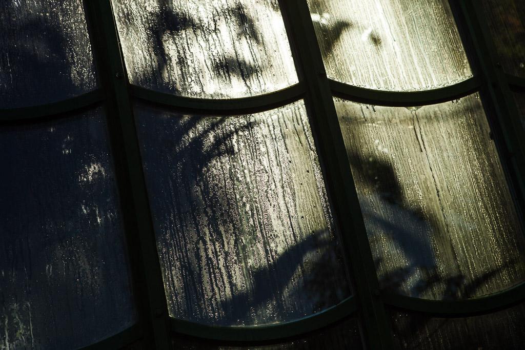 Schattengewächse