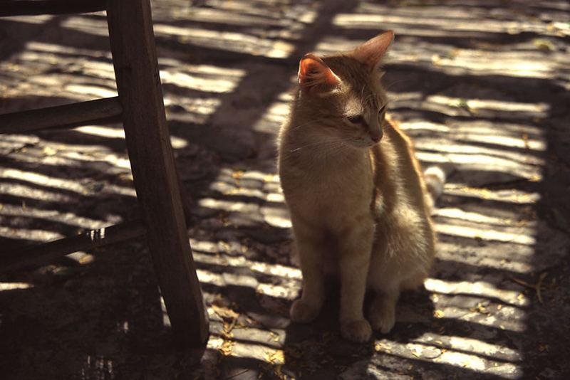 Schattenkatz