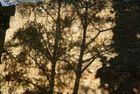Schattenmauer Alzey