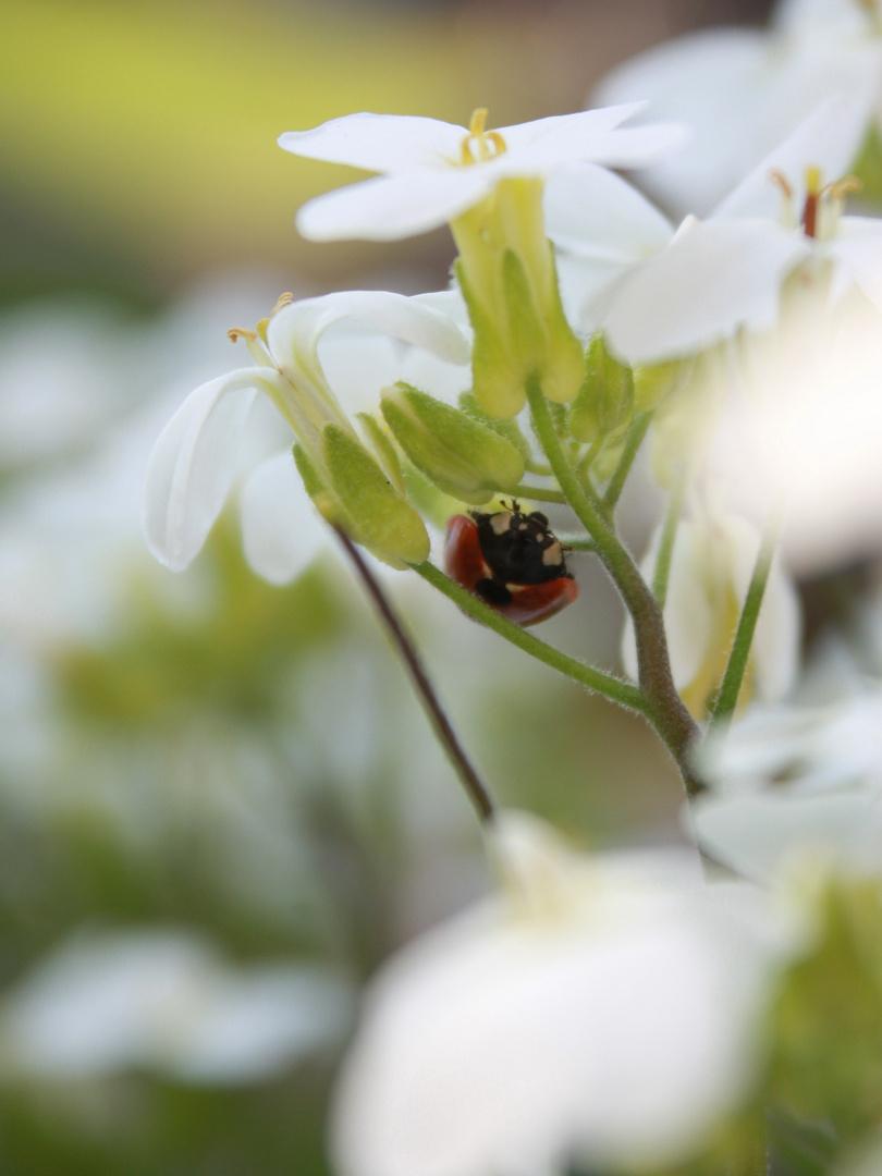 Schattenplatz unter der Blüte