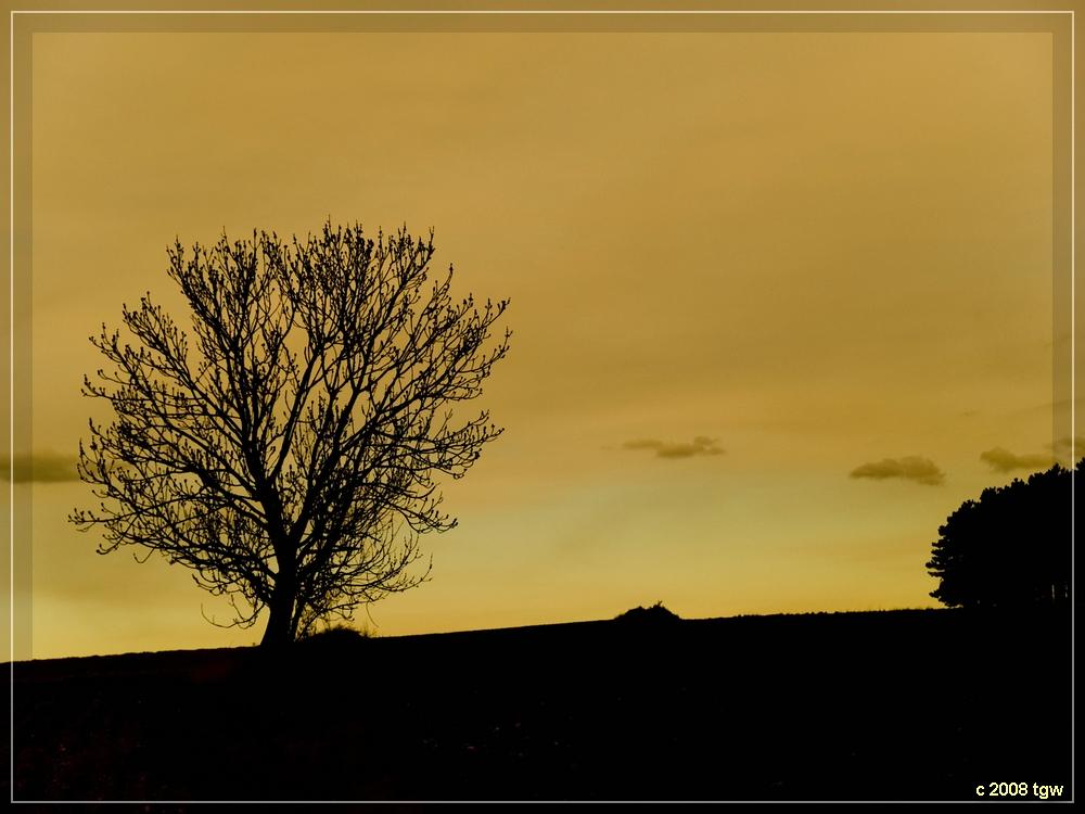 Schattenriss in Gelb