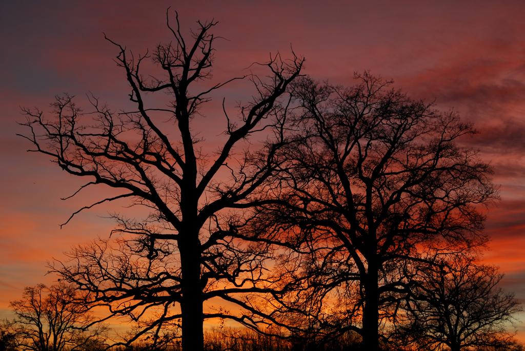 Schattenspiel am Abendhimmel