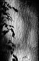 Schattenspiel der Blätter