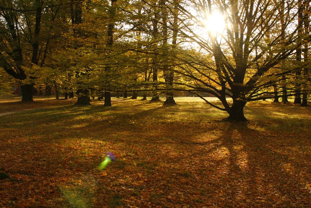 Schattenspiel im Branitzer Park