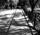 Schattenspiel im Herbst