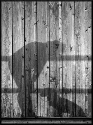 Schattenspiele - braver Hund!