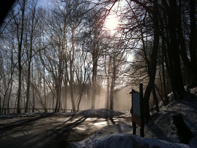 Schattenspiele im Wald
