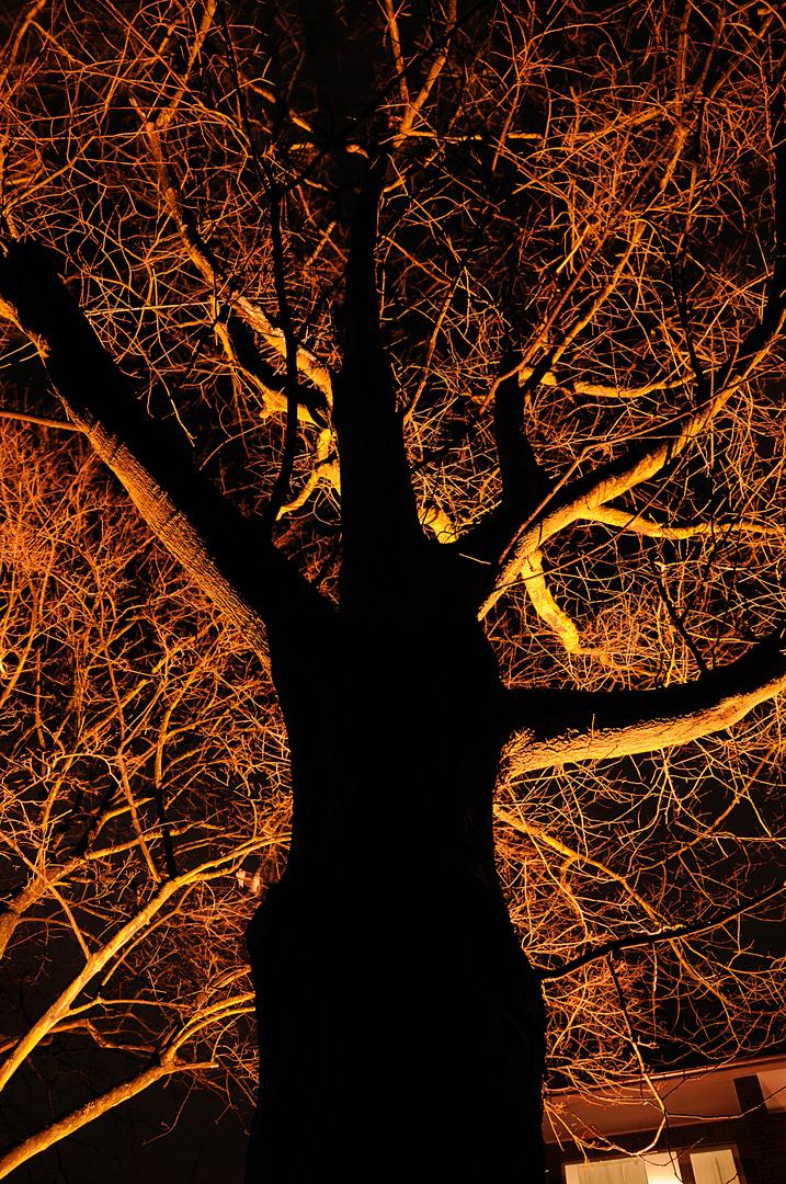 Schattenspiele in der Natur