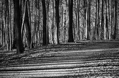 schattenstreifenwaldweg