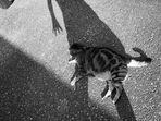 Schattentraum