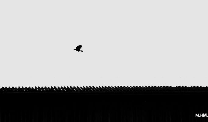 Schattenvogel...
