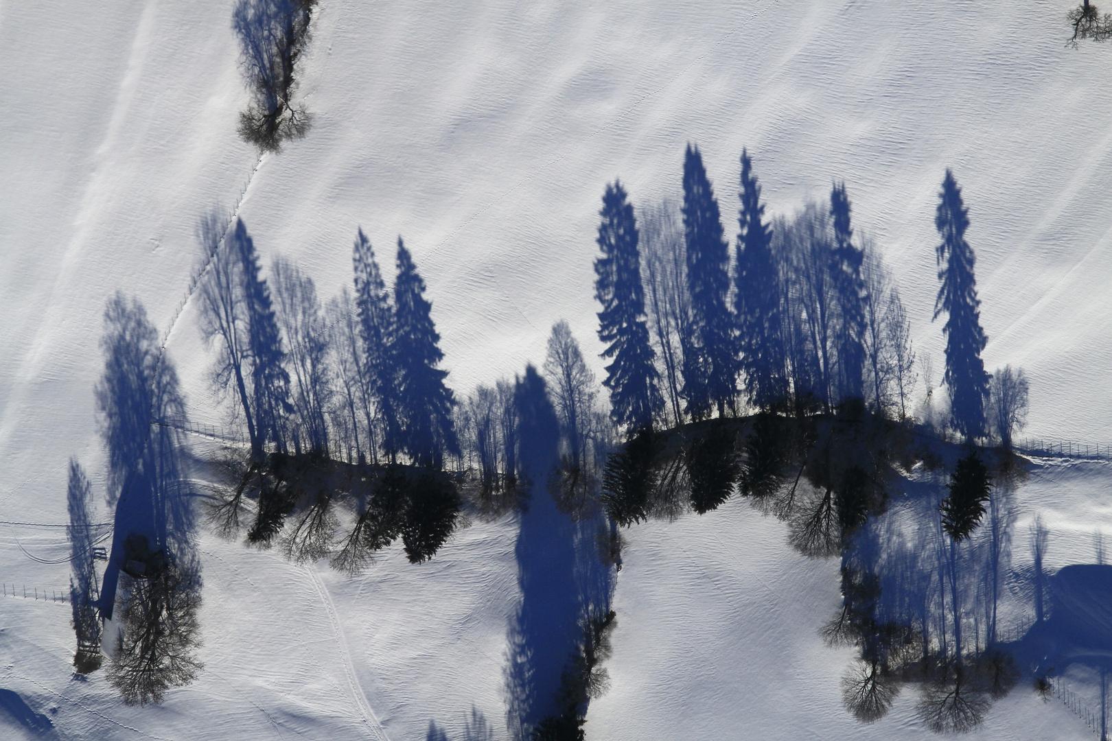 ~Schattenwald~