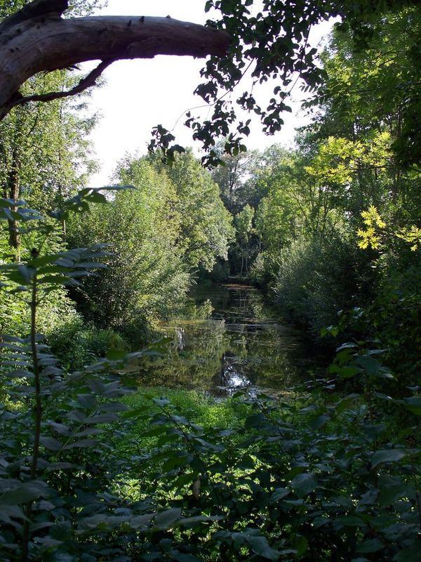 schattiger Teich