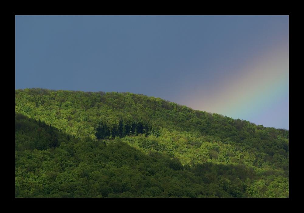 Schatz im Wald
