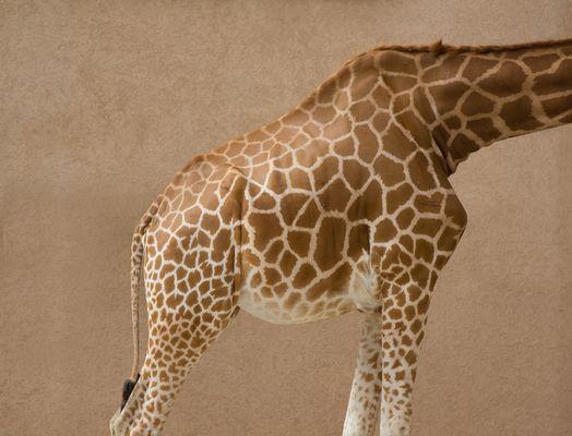 Schatz, wo ist denn der Rest der Giraffentapete?
