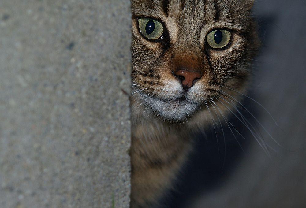 Schau lieber in die Augen eines Tigers als in die eines Beamten....